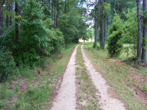 Acreage, Timber, Homesite : Clayton : Barbour County : Alabama