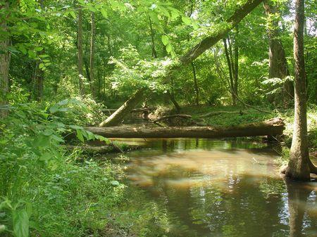 Timber And Recreation : Tennile : Washington County : Georgia