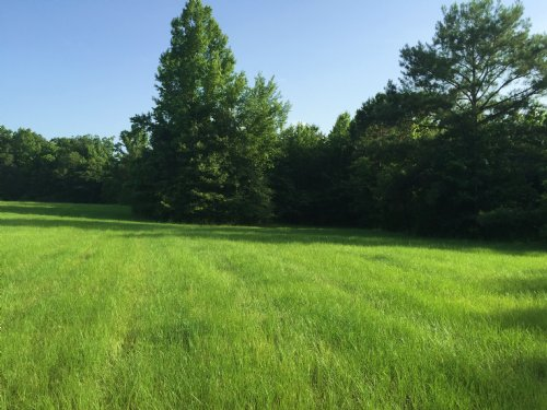 16 Ac Open Pasture : Wesson : Copiah County : Mississippi