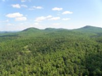 Hardwood Mountain Forest