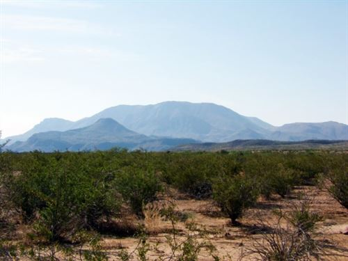 80 Acres: Owner Financing. : Terlingua : Brewster County : Texas