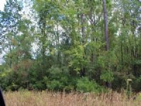 25 Acres On A Paved Road : Waycross : Ware County : Georgia