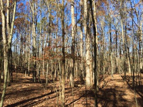 White Oak Hills : Elberton : Elbert County : Georgia