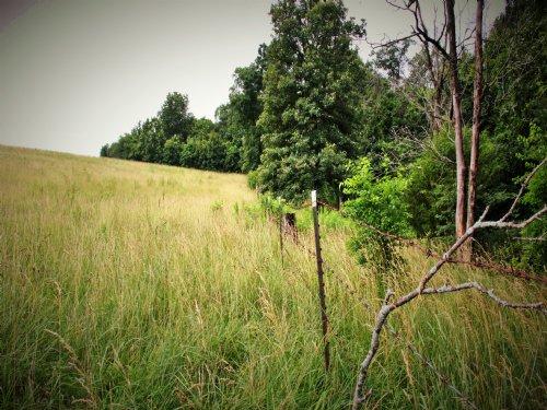 97 Acres : New London : Ralls County : Missouri
