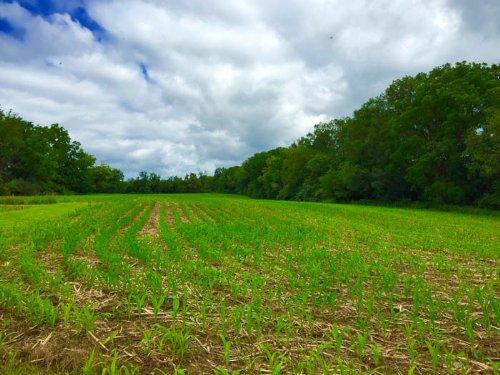 83+/- Acre Farm : Nescopeck : Luzerne County : Pennsylvania