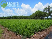 80± Ac North Fl Blueberry Farm : Hawthorne : Alachua County : Florida