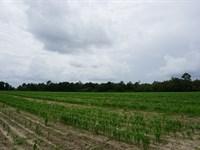 Stewart Farm : Hawkinsville : Pulaski County : Georgia