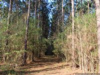 119 Ac Timber Investment