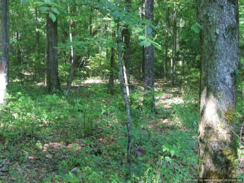 73.5 Ac Hunting Tract : Canton : Madison County : Mississippi
