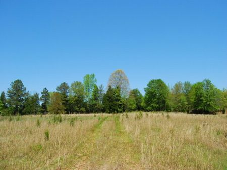 65 Acre Homesite Overlooking River : Woodruff : Spartanburg County : South Carolina
