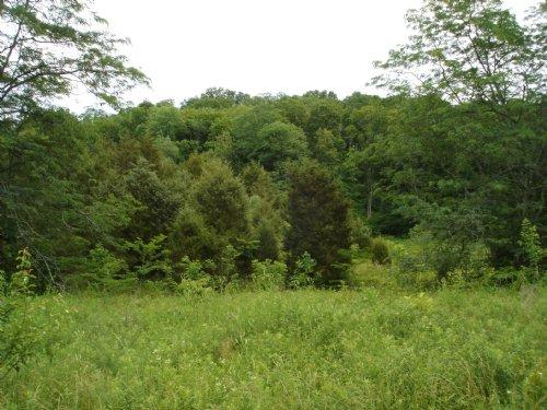 Golf Course Views : Chuckey : Greene County : Tennessee