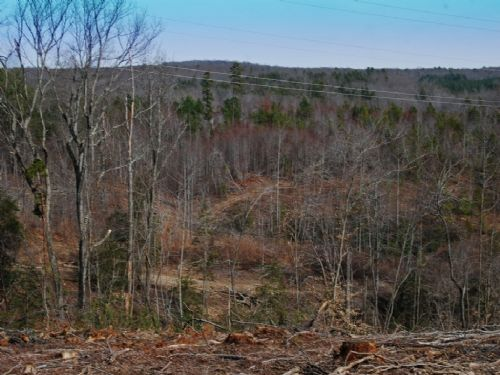 30 Acre Timber Tract : Kings Creek : Cherokee County : South Carolina