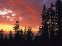 Forested Cabin / Rv Acreage