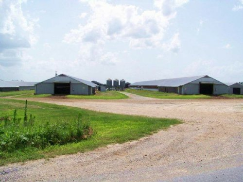 8 House Broiler And Cattle Farm : Grove Oak : De Kalb County : Alabama