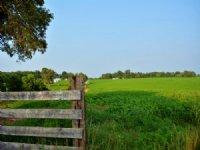 Productive Farm : Scottsville : Albemarle County : Virginia
