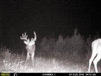 Monster Buck Heaven