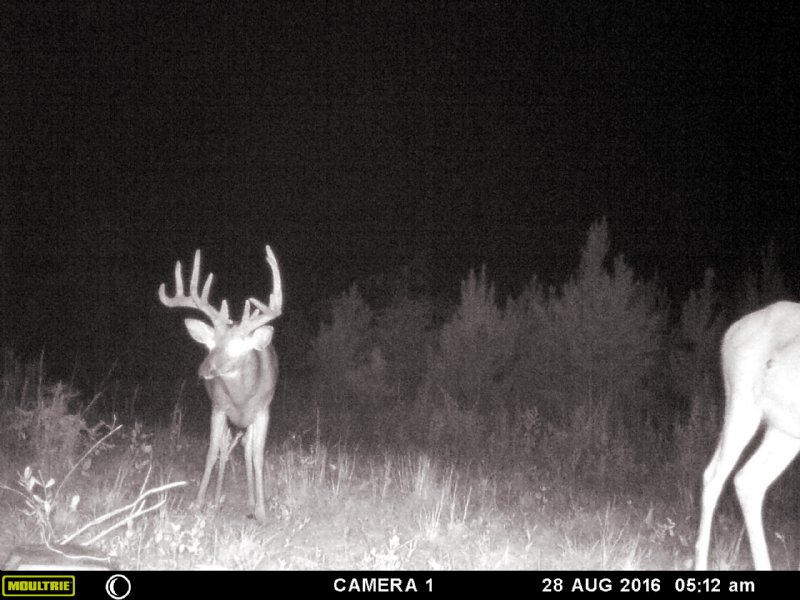 Monster Buck Heaven : Fort Valley : Peach County : Georgia