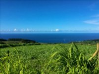 20 Ac Hamakua Coast 450 : Papaloa : Hawaii County : Hawaii