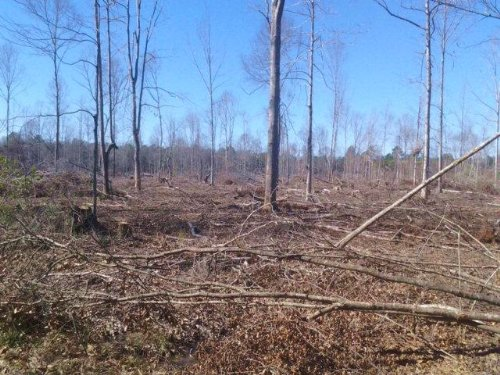 Hunting Property With Camp 720 Acre : Monticello : Lawrence County : Mississippi