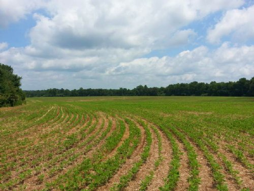 135+/- Acres Of Cropland : Crossville : DeKalb County : Alabama