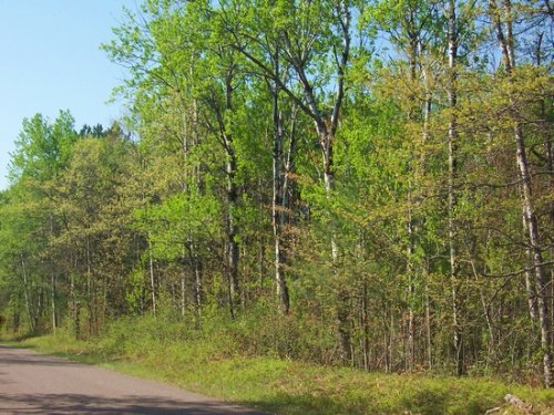 40 Acres - Hershey Lane : Lac Du Flambeau : Adams County : Wisconsin