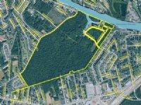176.53 Acres Folley-stalvey Pine
