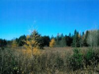 48+/- Acre Land For Sale