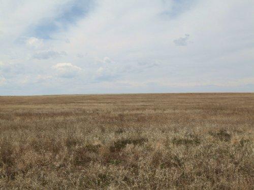 Expiring Crp & Pasture Land : Fort Morgan : Adams County : Colorado