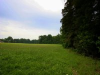 69.4 Mix Pasture & Mature Trees : Woodford : Caroline County : Virginia