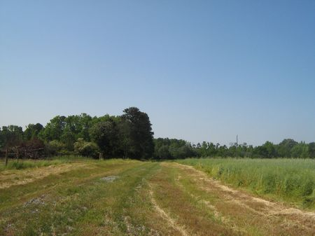 Great Hunting Tract $1750 Per Acre : Stephens : Oglethorpe County : Georgia