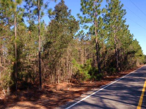 11 Acres Wooded  Homesite : Jesup : Wayne County : Georgia