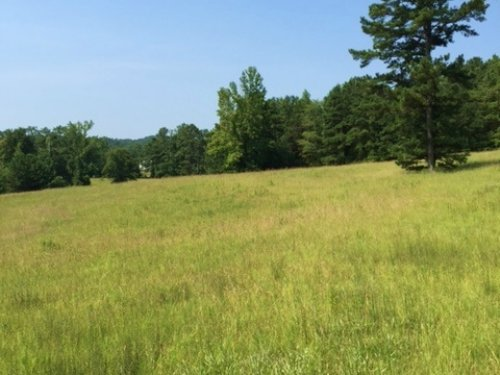 35+/- Acres On Hwy 435 : Columbiana : Shelby County : Alabama