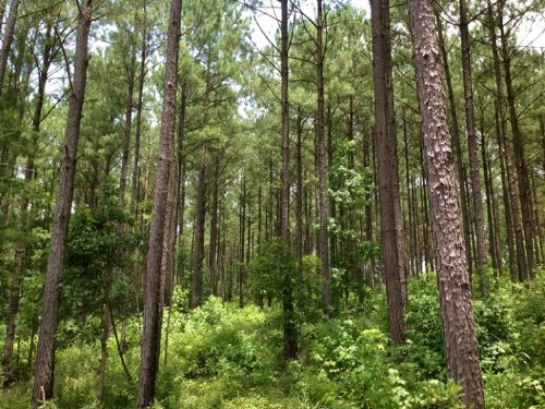 390 Acres Valley Grande : Valley Grande : Dallas County : Alabama