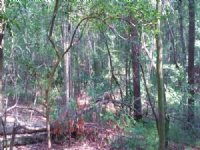 Ohoopee River Tract