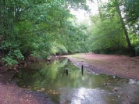174 Ac On The Turkey Creek Trail