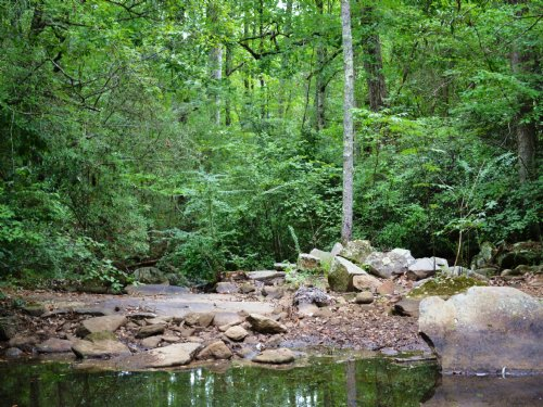 Recreation And Hunting 96 +/- Acres : Wadley : Randolph County : Alabama