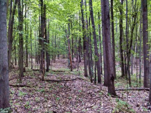 Fantastic Heavily Wooded 80 Acres : Walkerville : Oceana County : Michigan