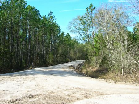 442.85 Acres-$2550/ac, Planted Pine : Starke : Bradford County : Florida