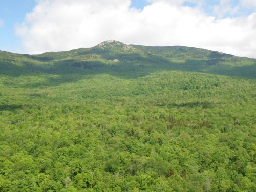 Patterson Brook Forest : Worcester : Washington County : Vermont
