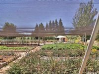 Organic Farm For Sale