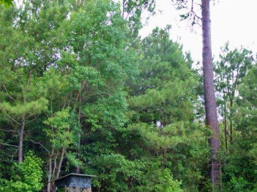 Monticello Hunting Tract : Monticello : Jefferson County : Florida