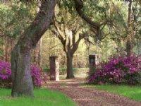 Pleasant Hill Plantation : Garnett : Hampton County : South Carolina