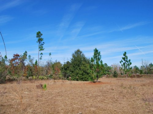 16 Acres Great For Homesite Or Rec : Screven : Wayne County : Georgia
