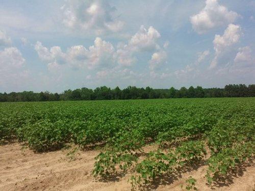 Reedy Creek Farm : Lyons : Emanuel County : Georgia