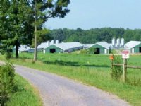 4 House Broiler Farm & Cattle Farm