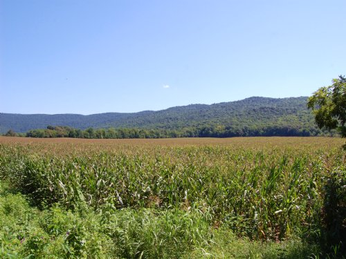 55+/- Acres Of Level Row Crop Land : Manchester : Coffee County : Tennessee