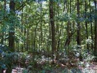 Level Land With Mature Hardwoods