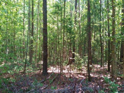 Buck Hollow Lane : Cartersville : Cumberland County : Virginia