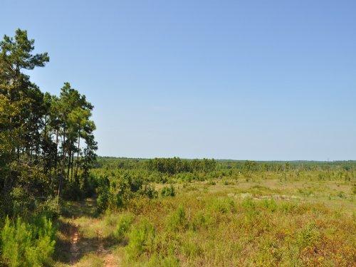 152 Acres Ryan's Ferry Road : Pointblank : San Jacinto County : Texas