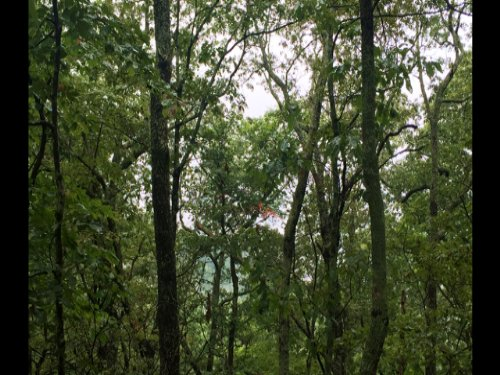305+/- Acres Hunting Property : Monteagle : Marion County : Tennessee